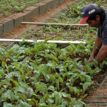 """<p>""""Casa della Gioventù"""" – Itaobim, Brasile<br /> Coltivazione orti comunitari a sostegno delle famiglie.<br /> </p>"""