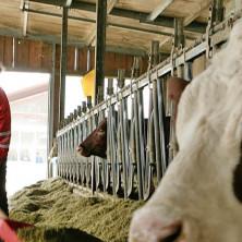 """<p>Azienda Agricola """"CASCINA BIANCA"""" - Cervasca (CN)<br /> Ecostalla, allevamento e produzione di latte.</p>"""