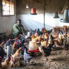 """<p>""""Cicetekelo Youth Project"""" – Ndola, Zambia<br /> Coltivazione mais e orti e allevamento animali per la vendita e l'autosostentamento.</p>"""