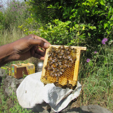 """<p>""""RO' LA FORMICHINA"""" Soc. Coop. Soc. - Linera (CT)<br /> Apicoltura, produzione e vendita miele.<br /> </p>"""